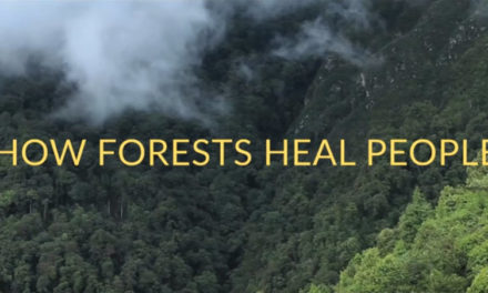 How Plant Spirit Medicine Heals People